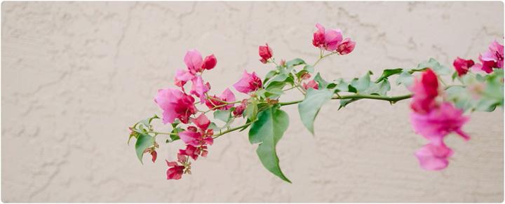 gerber gardens, mesa az wedding photographer, annie gerber_0068.jpg